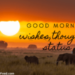 Good Morning Wishes - fresh thoughts for Status, SMS, images, and videos