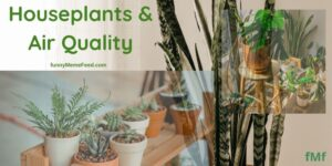 Featured Image - houseplants and air quality